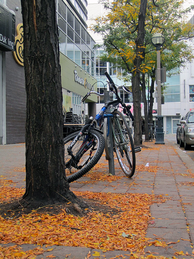 Around Ryerson, the streets are turning gold — no paint necessary. (Laura Lehman/Ryersonian Staff)