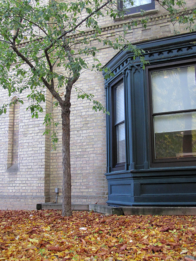 Leaves ready for raking in the Kerr Hall Quad. (Laura Lehman/Ryersonian Staff)