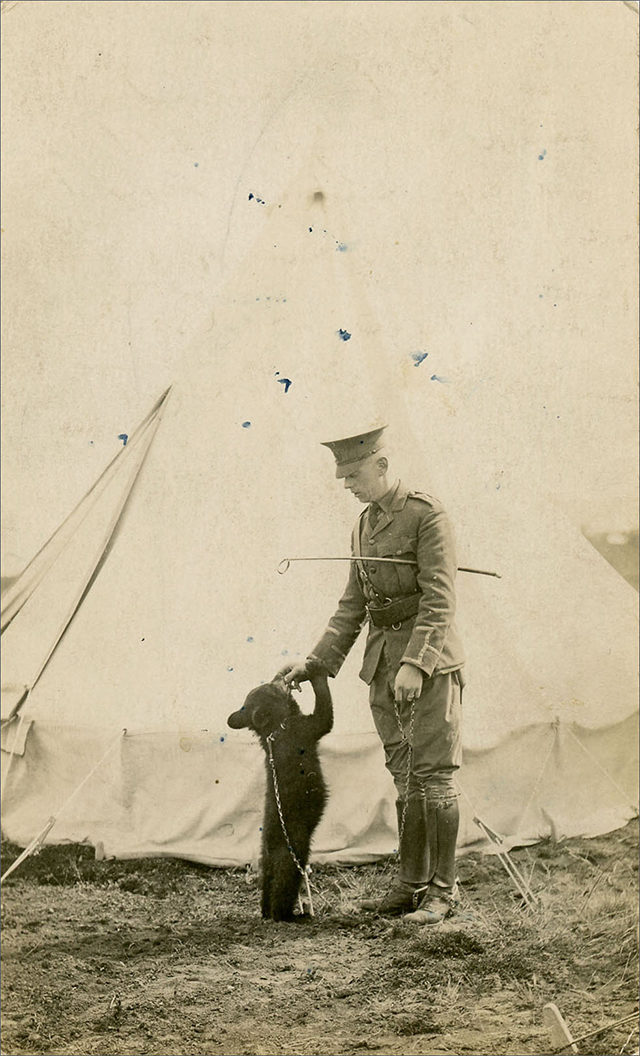 Photographer Unknown, Harry Colebourn feeding Winnie, Salisbury Plain, England, 1914, gelatin silver print. From The Colebourn Family Archive.  (Ryerson Image Centre)